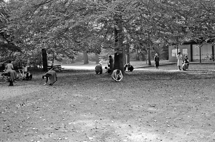 16-beukennootjes-rapen-ca-1960