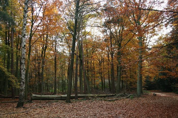 18-2006-achtergelaten-boom-in-het-bos