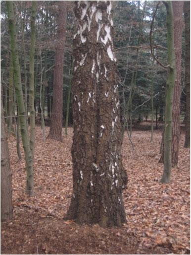 geen-dood-hout-op-bosvloer